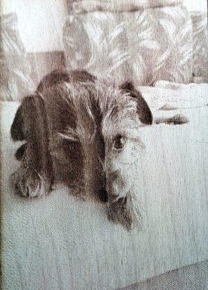 gravirovana-fotka-pes